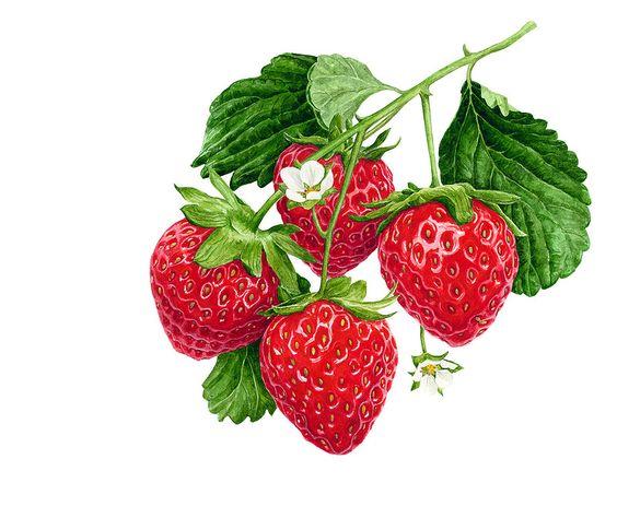 Цветные овощи и фрукты картинки для детей - красивые и прикольные 20