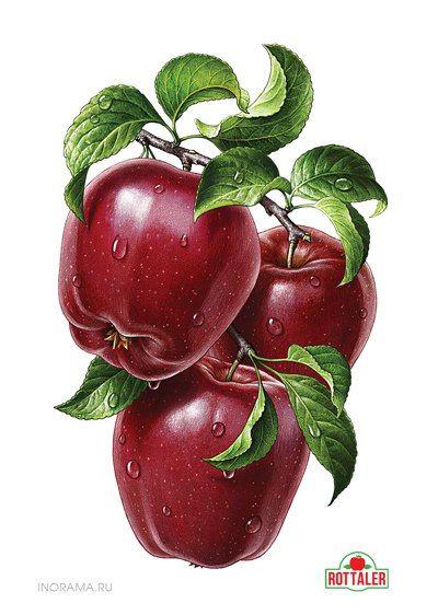 Цветные овощи и фрукты картинки для детей - красивые и прикольные 4