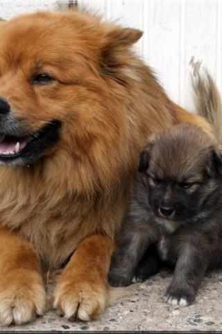 Красивые и прикольные картинки, обои домашних животных на телефон 11