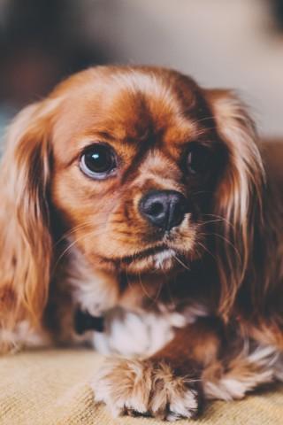 Красивые и прикольные картинки, обои домашних животных на телефон 4
