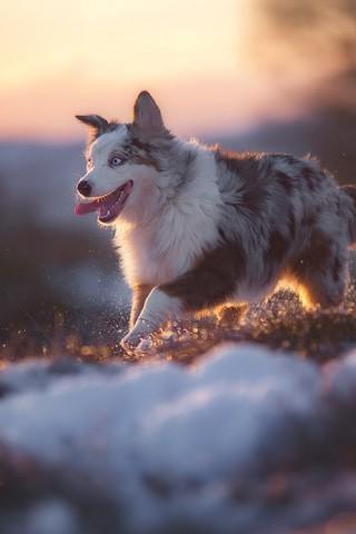 Красивые и прикольные картинки, обои домашних животных на телефон 7