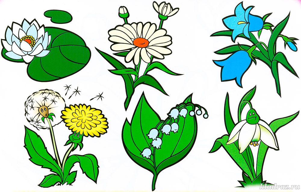 Очень красивые детские и интересные картинки цветов для детей - сборка 1