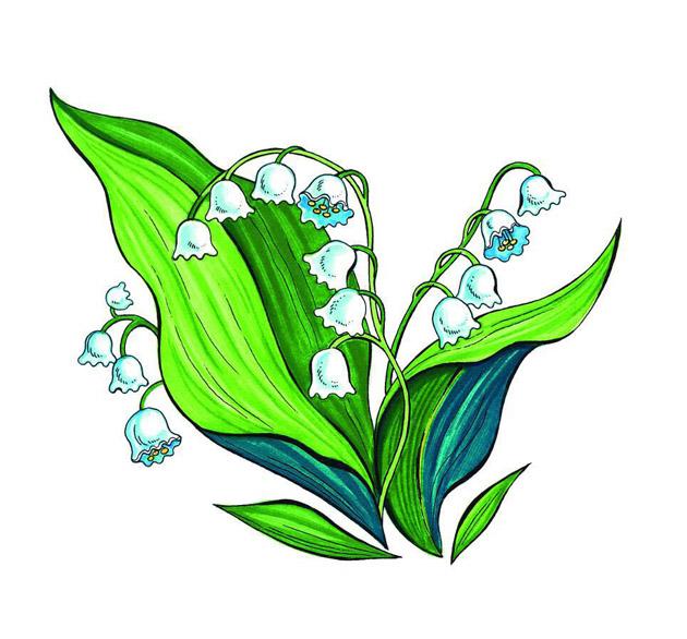 Очень красивые детские и интересные картинки цветов для детей - сборка 12