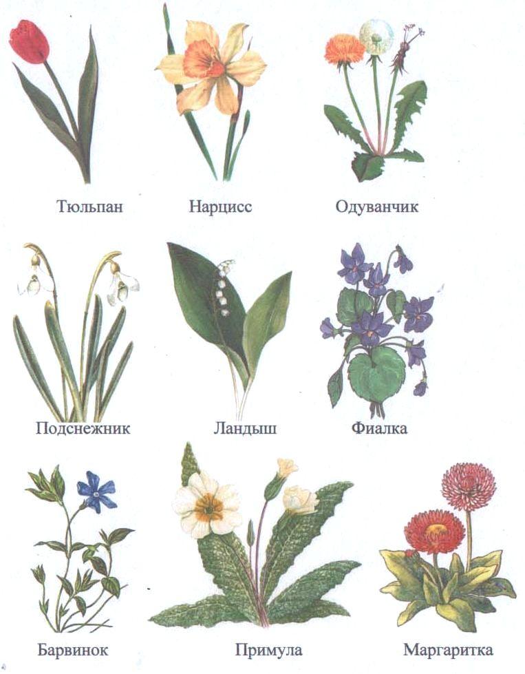 Очень красивые детские и интересные картинки цветов для детей - сборка 13