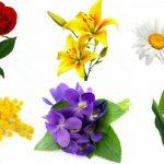 Очень красивые детские и интересные картинки цветов для детей - сборка 14