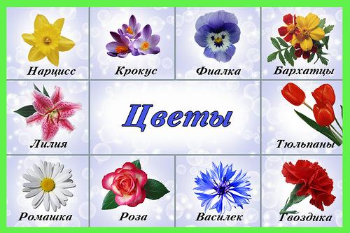 Очень красивые детские и интересные картинки цветов для детей - сборка 7
