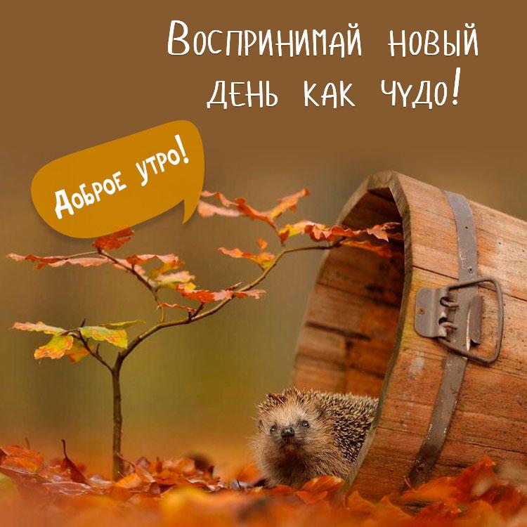 Прикольные картинки доброе утро осеннего дня - милые открытки 9