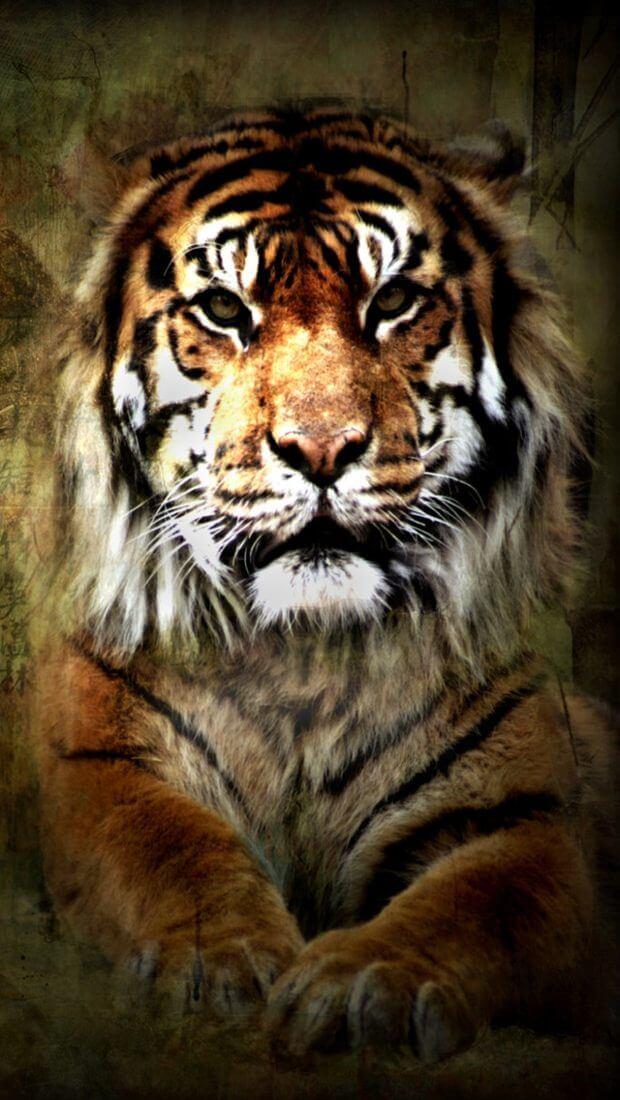 Красивые и крутые картинки тигра на заставку телефона - подборка 4