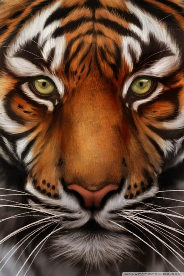 Красивые и крутые картинки тигра на заставку телефона - подборка 19