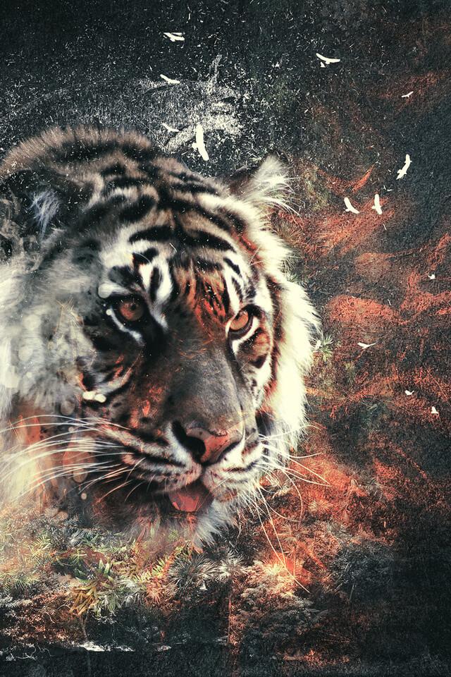 Красивые и крутые картинки тигра на заставку телефона - подборка 9