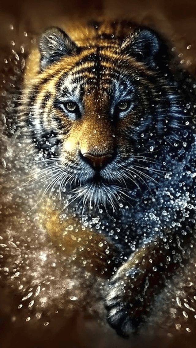 Красивые и крутые картинки тигра на заставку телефона - подборка 20