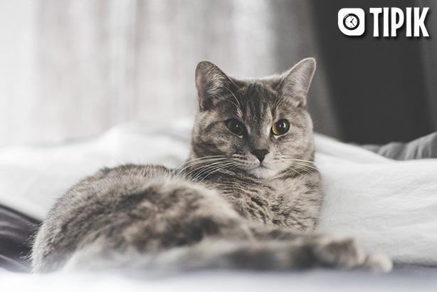 Как самостоятельно удалить клеща у кошки - способы и советы 2