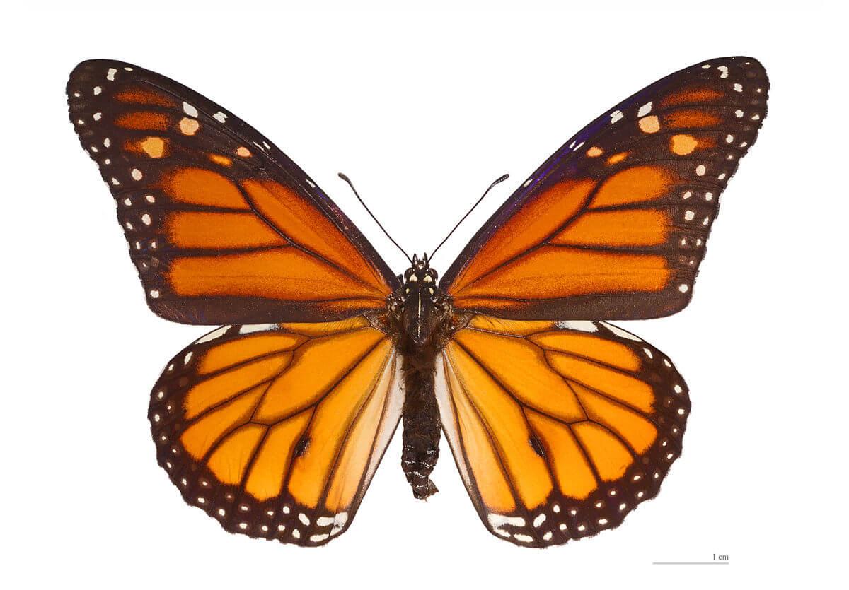 Красивые рисунки, картинки бабочки для детей - коллекция 2