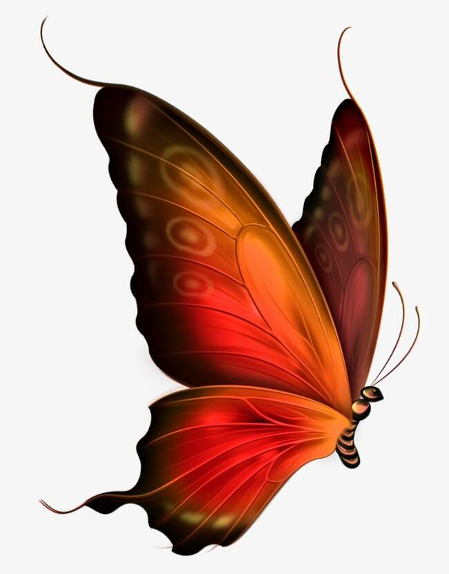 Красивые рисунки, картинки бабочки для детей - коллекция 6