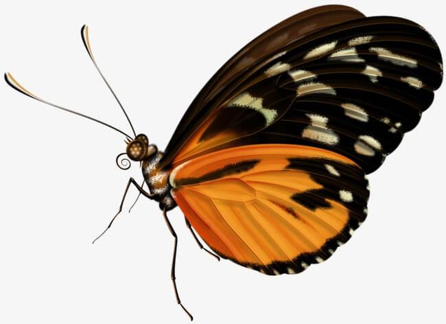 Красивые рисунки, картинки бабочки для детей - коллекция 5