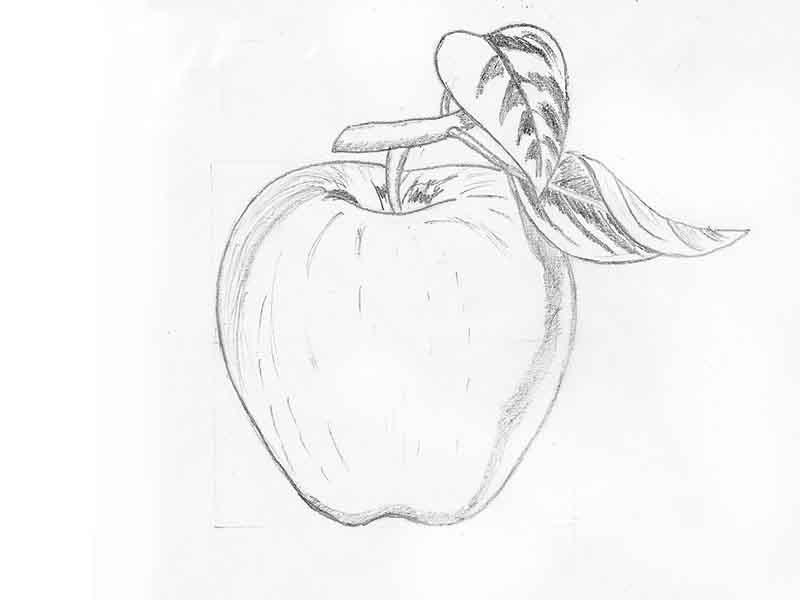 Рисунки для начинающих карандашом для срисовки - самые прикольные 5