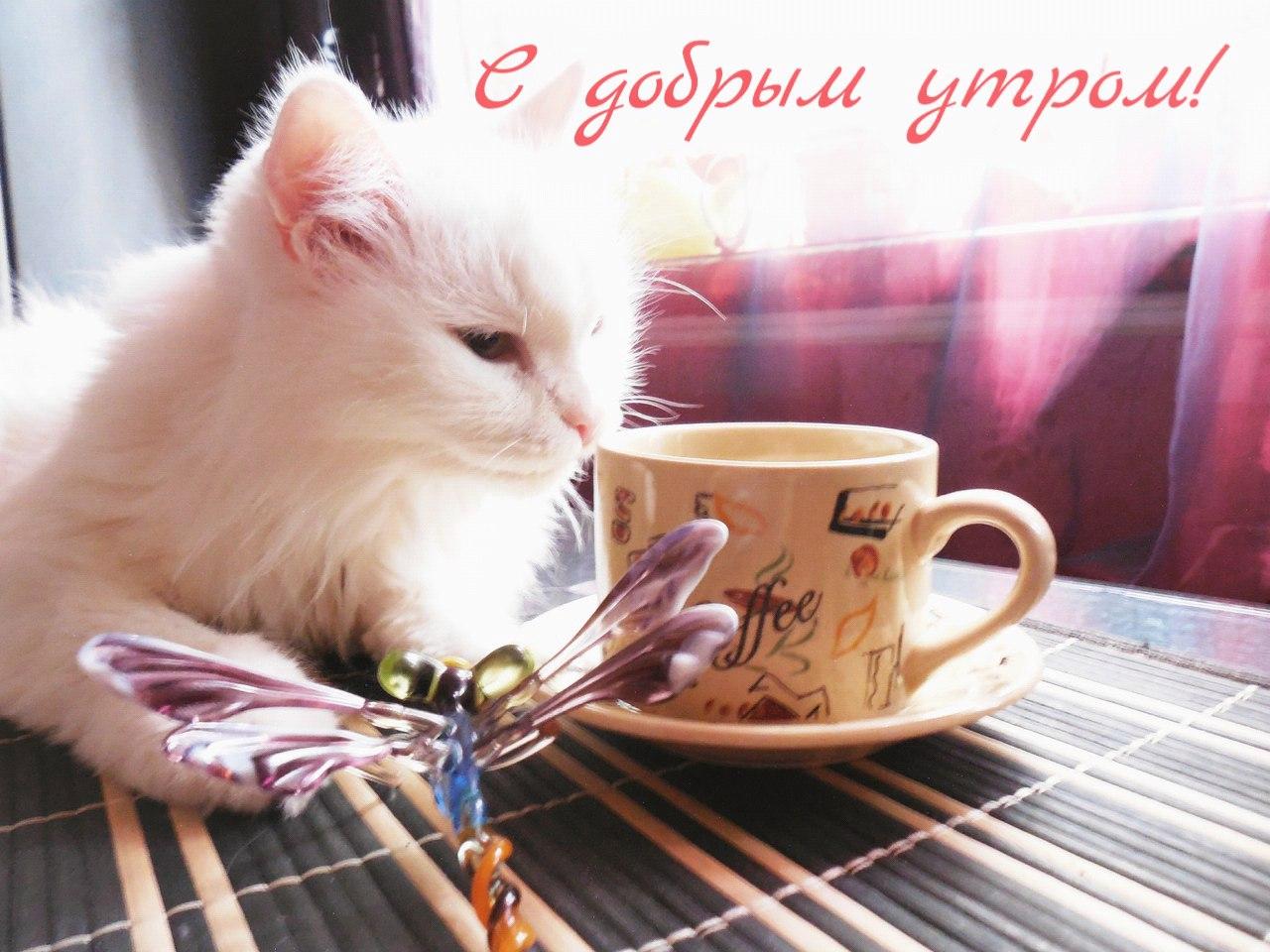 Добрые и красивые картинки с добрым утром, пожелания 14