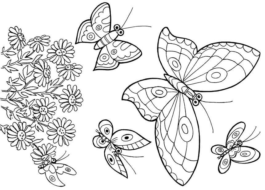 Красивые рисунки, картинки бабочки для детей - коллекция 13