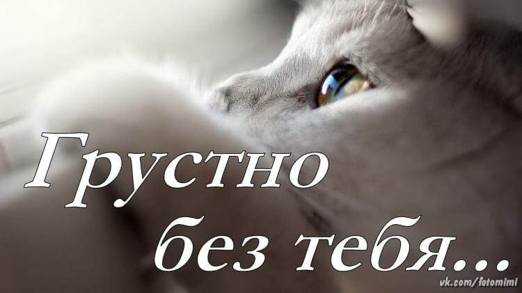 """Не могу без тебя"" картинки и открытки с надписями 7"