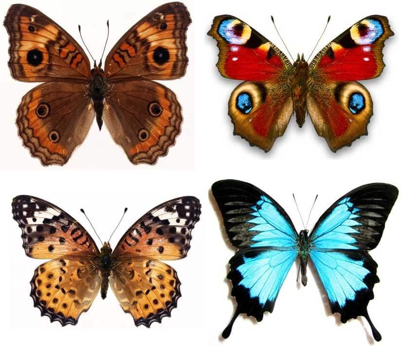 Красивые рисунки, картинки бабочки для детей - коллекция 8