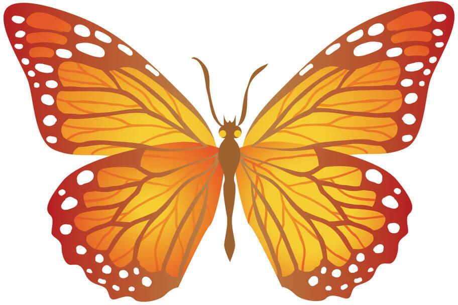 Красивые рисунки, картинки бабочки для детей - коллекция 9