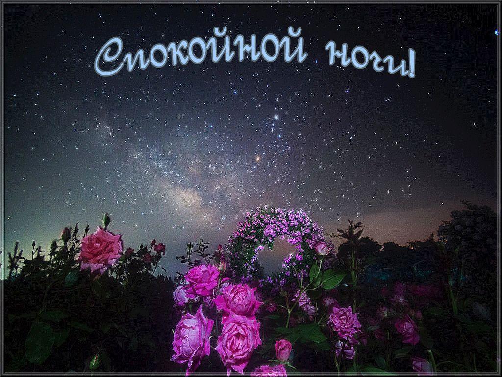 """""""Спокойной ночи моя хорошая"""" - красивые картинки и открытки 5"""