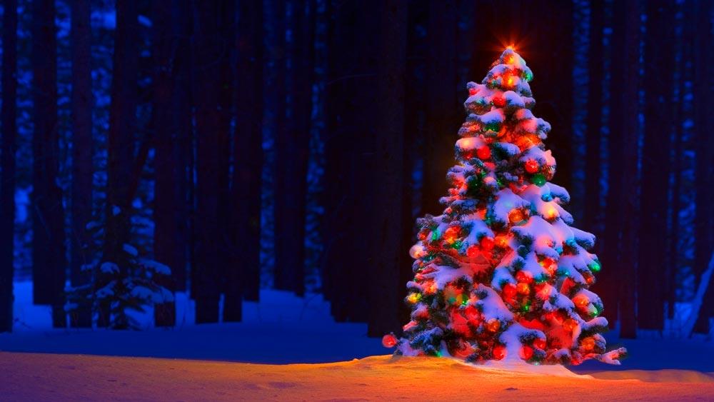 Прикольные и смешные картинки про новогоднюю елку - подборка 11