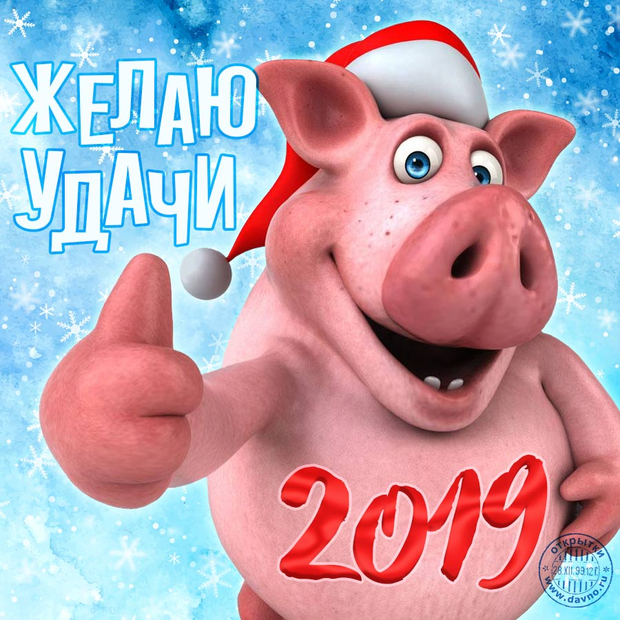 С новым 2019 годом свиньи - прикольные картинки поздравления 7