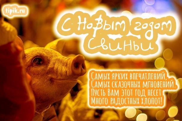 С новым 2019 годом свиньи - прикольные картинки поздравления 9