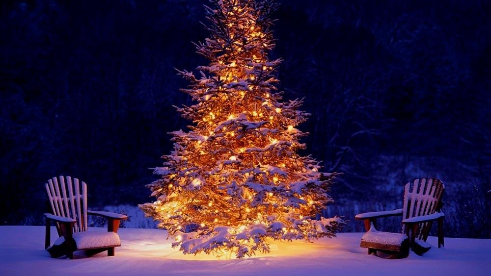 Прикольные и смешные картинки про новогоднюю елку - подборка 13