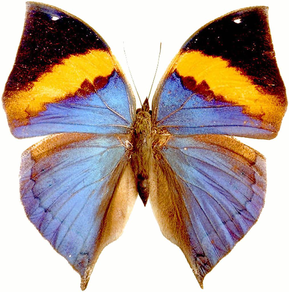 Красивые рисунки, картинки бабочки для детей - коллекция 15