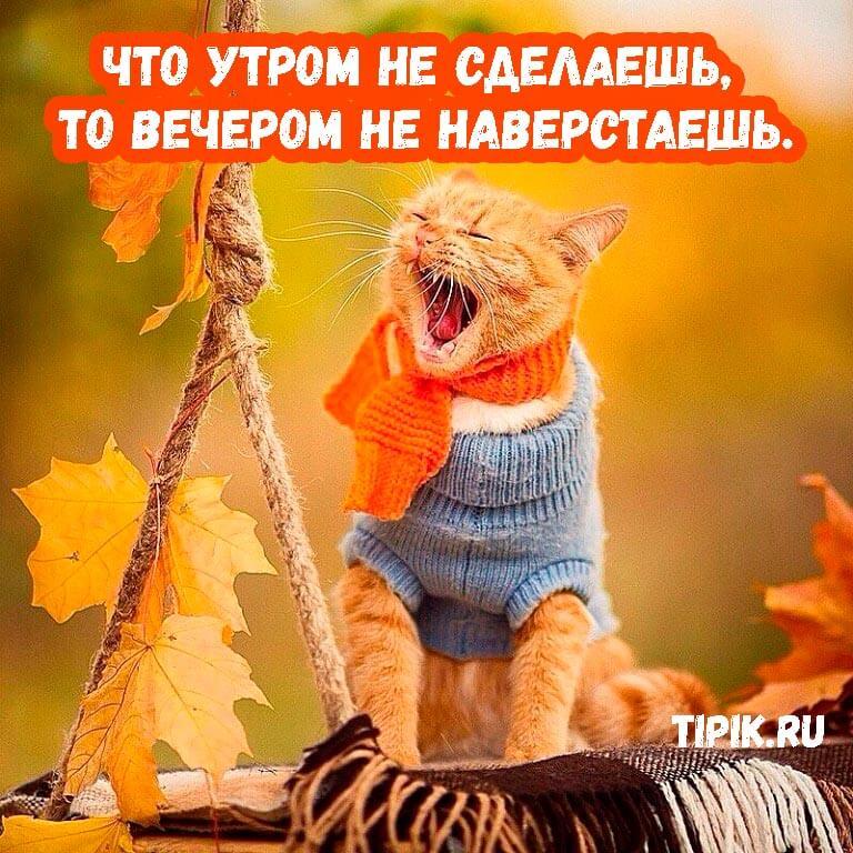 Утро - прикольные и забавные картинки для настроения (18 фото) 14