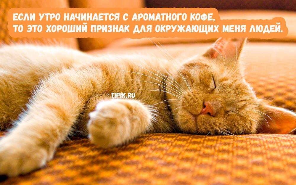 Утро - прикольные и забавные картинки для настроения (18 фото) 17
