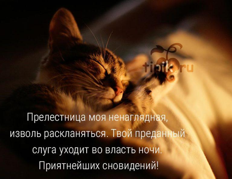 Картинки с надписью спокойной ночи котик мой, поздравление бабушке