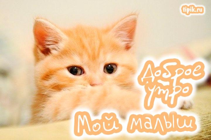Днем, картинки с котятами доброе утро любимая