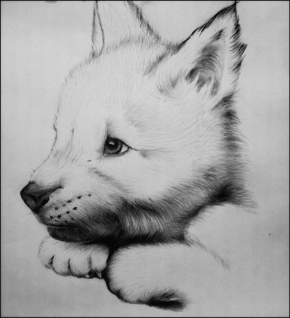 смотреть рисунки карандашом для начинающих животные погибшим тот