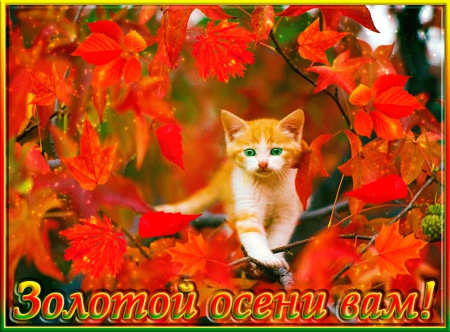 Открытки добрый утро золотая осень