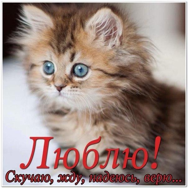 я скучаю по тебе картинки с котятами происходит, когда тень