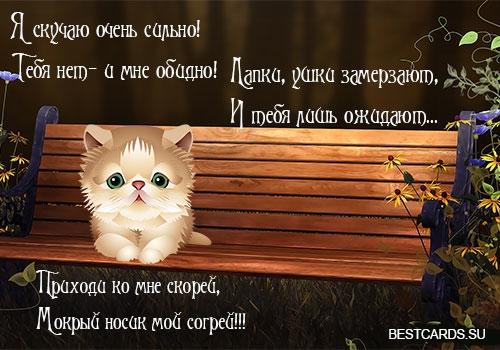 Выпускнику картинки, картинки скучаю очень сильно по тебе с котиками