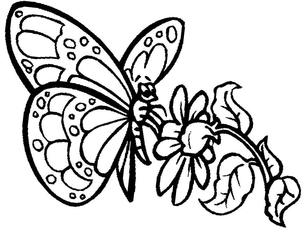 Днем, картинки бабочка на цветке рисунок