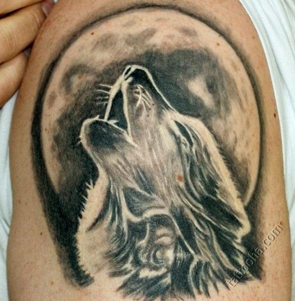 Фото волки луна (368 фото)