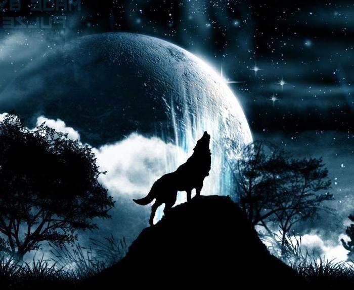 Картинки волк воет на луну что обозначает
