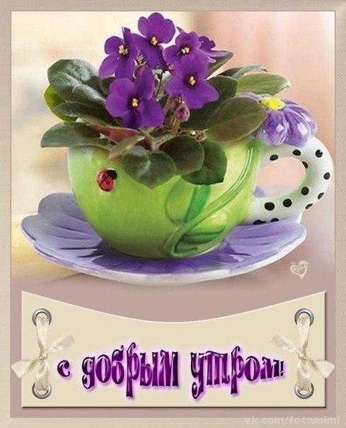 Дениса, с добрым утром картинки красивые цветы