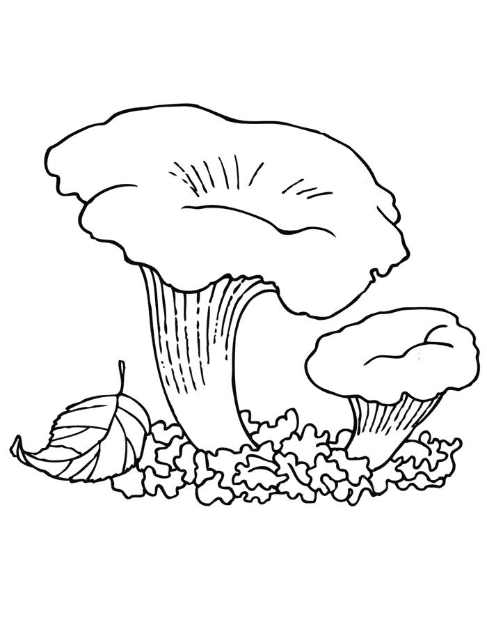 Картинка раскраска грибочки для детей - рисунок