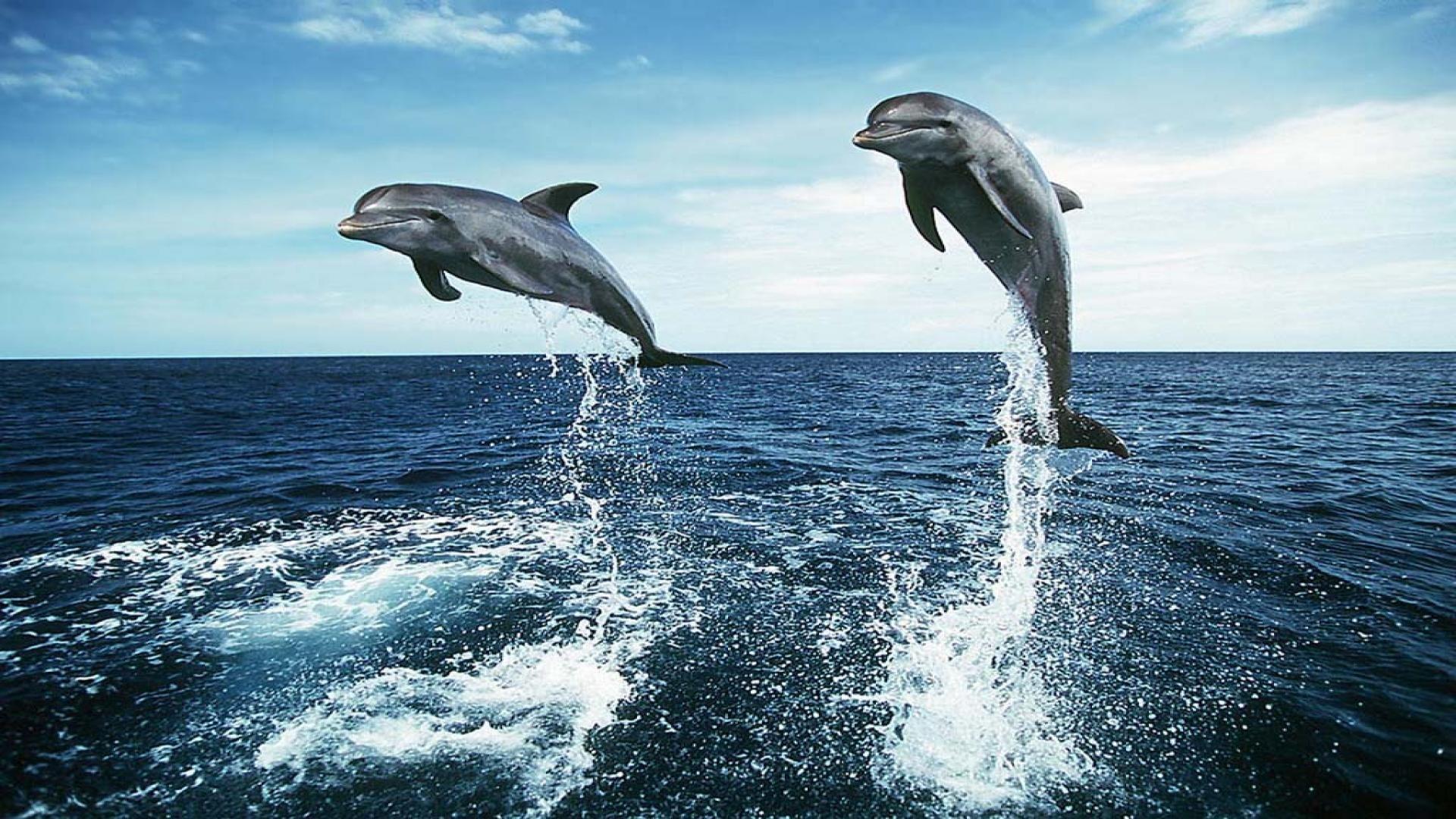 картинки дельфинов на весь экран омской школы после