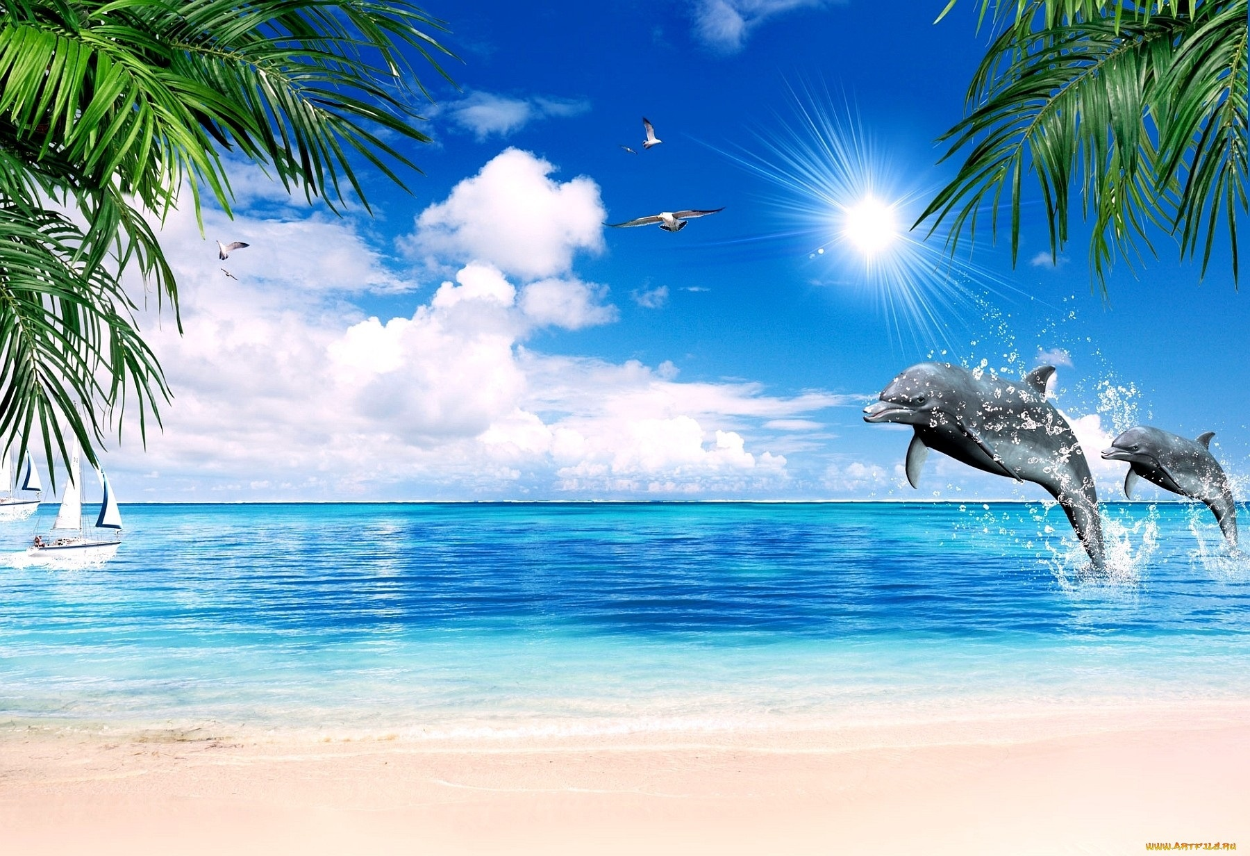 картинки дельфины море солнце волна
