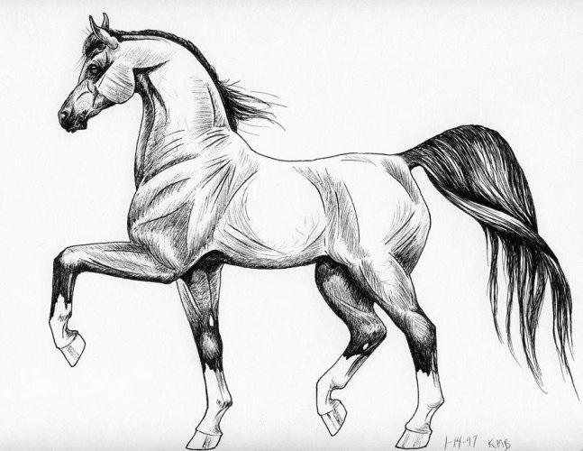 Красивые картинки на срисовку карандашом лошади