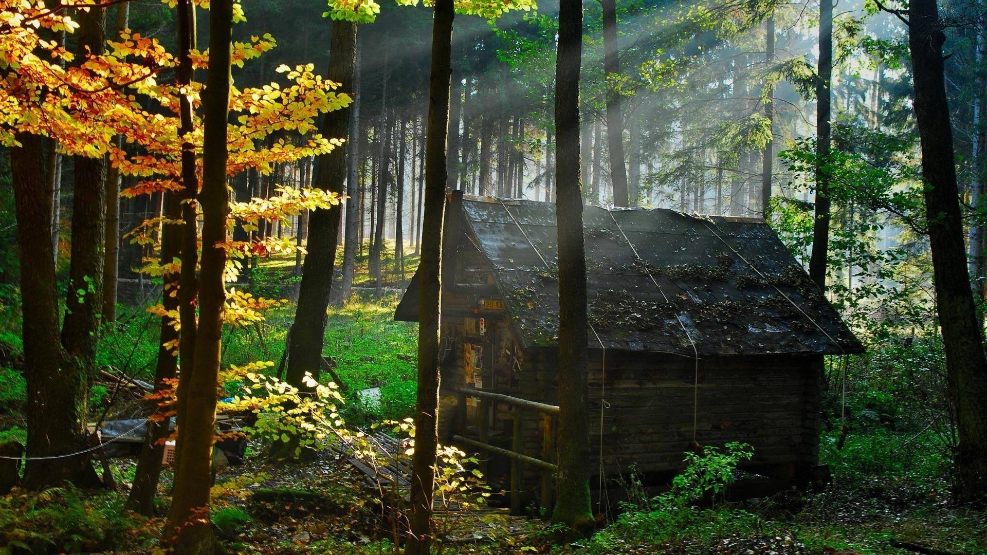 дом на окраине леса картинки фото барбариса амурского
