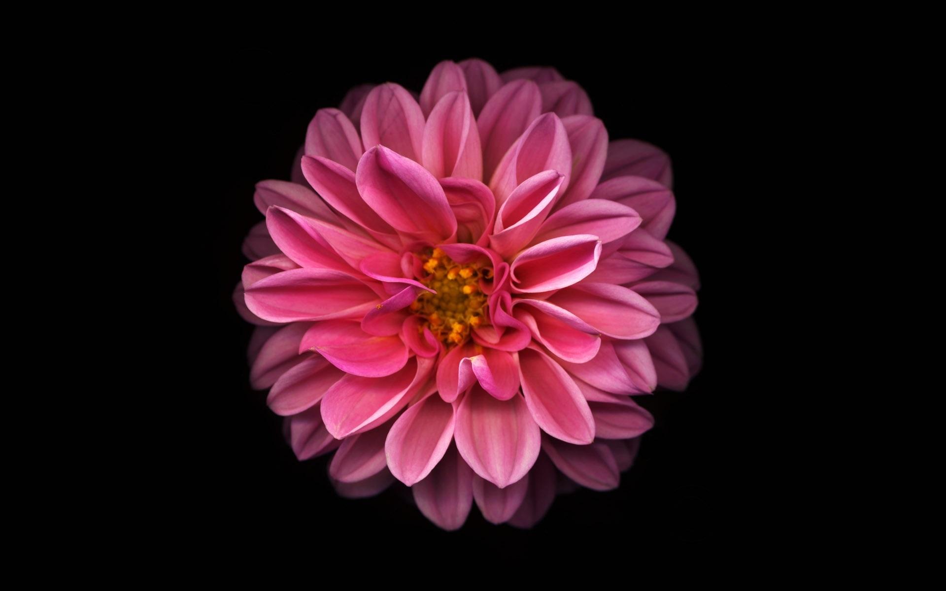 Праздником односельчане, картинки цветы на фон айфона