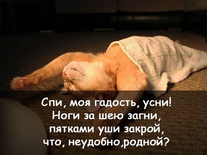 Спокойной ночи друзья картинки прикольные смешные, тебя люблю